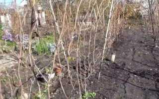 Подготовка винограда к зиме на Урале