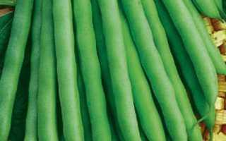 Фасоль Зеленый Гигант — описание сорта, фото, отзывы, посадка и уход