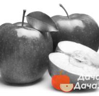 Персик Память Симиренко — описание сорта и отзывы садоводов