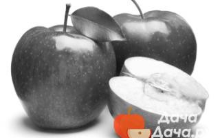 Персик Бархатный — описание сорта и отзывы садоводов