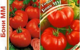 Томат Бони Мм — описание сорта, отзывы, урожайность