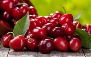 Посадка черешни осенью: советы садоводам