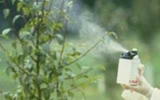 Обработка вишни весной от болезней и вредителей: советы садоводам