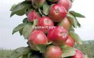 Яблоня колоновидная Триумф — описание сорта, фото, отзывы