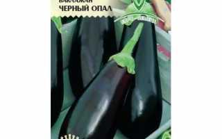 Баклажан Черный Опал — описание сорта, фото, отзывы, посадка и уход
