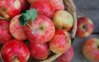 Как приготовить вкусный яблочный сок на зиму, используя соковыжималку