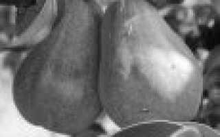 Лучшие сорта груш для средней полосы России с фото и описанием