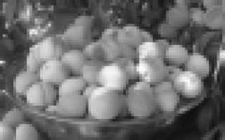 Персик Русский — описание сорта и отзывы садоводов
