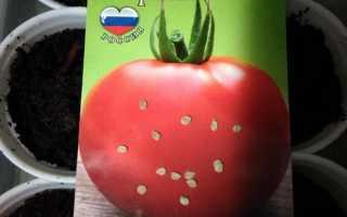 Томат Инфинити F1 — описание сорта, отзывы, урожайность