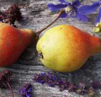 Посадка груши осенью — как правильно?