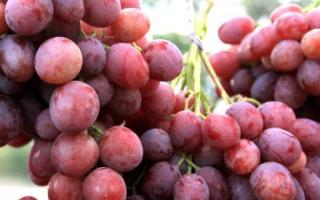 Виноград Анюта: описание сорта, фото и отзывы садоводов
