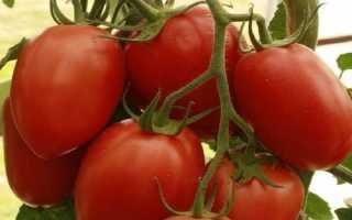 Томат Императрица F1 — описание сорта, отзывы, урожайность