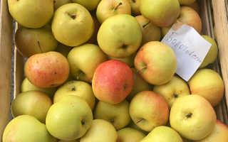Яблоня Болотовское — описание сорта, фото, отзывы