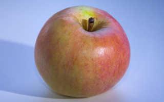 Яблоня Персиянка — описание сорта, фото, отзывы