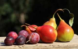 Груша Россошанская красивая — описание сорта, фото, отзывы садоводов