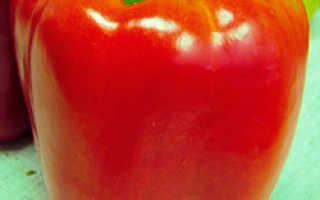 Сорт перца фламенко: фото и описание, агротехника выращивания