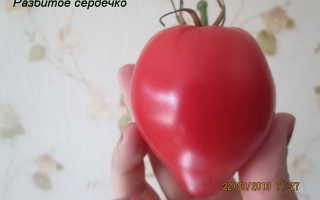 Томат Разбитое Сердечко — описание сорта, отзывы, урожайность