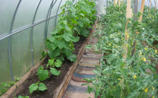 Можно ли сажать в одной теплице огурцы, помидоры и перцы?