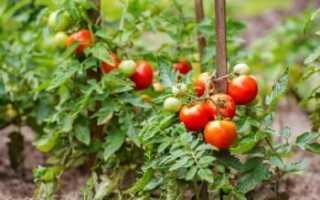 Можно ли сажать перец после томатов?