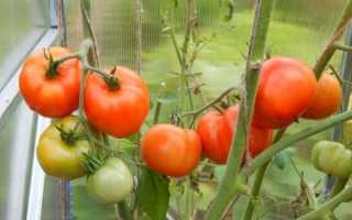 Томат Ураган F1 — описание сорта, отзывы, урожайность