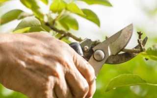 Как правильно формировать персик?