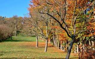 Обработка яблонь осенью
