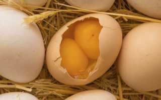 Почему получаются двухжелтковые яйца