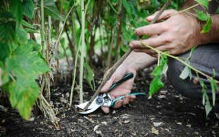 Обрезка малины летом после сбора урожая: видео