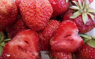 Клубника Виктория — описание сорта, фото и отзывы садоводов