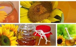 Подсолнечный мед: что содержится, чем полезен, кому нельзя есть, как использовать в лечебных целях