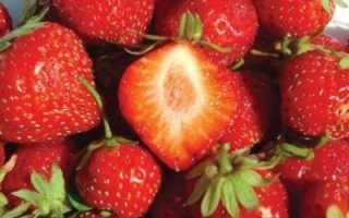 Клубника Мара Де Буа — описание сорта, фото и отзывы садоводов