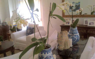 Орхидея блетилла: всё, что нужно знать о выращивании и правильном уходе