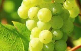 Уход за виноградом весной и летом