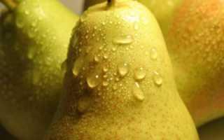 Груша Медовая — описание сорта, фото, отзывы садоводов
