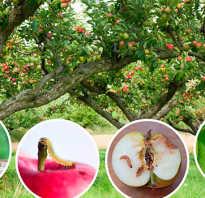 Обработка яблонь весной от болезней и вредителей — полезная информация