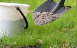 Подкормка сливы весной: советы садоводам