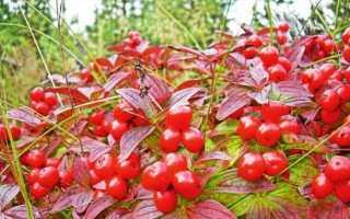 Полезные и вредные красные ягоды