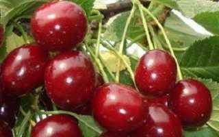 Подготовка вишни к зиме — отвечаем на вопросы дачников