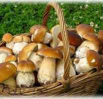 Виды съедобных лесных грибов с названиями, описанием, фото
