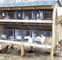 Виды клеток для кроликов, общие принципы постройки клеток