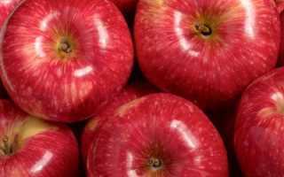 Яблоня Мантет — описание сорта, фото, отзывы