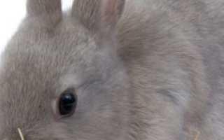 Можно ли кормить кроликов молочаем