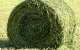 Правила приготовления кормов сенажного типа
