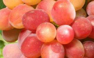 Виноград Морской: описание сорта, фото и отзывы садоводов