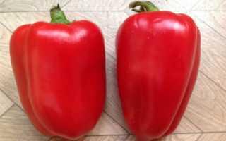 Перец Бизон Красный — описание сорта, фото, отзывы, посадка и уход
