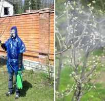 Обработка яблонь весной медным купоросом