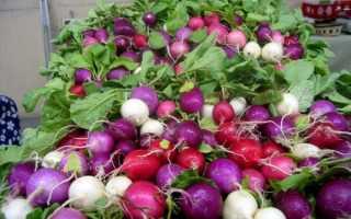 Самые урожайные сорта редиса для открытого грунта