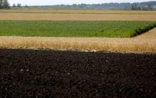 Каким будет урожай пшеницы в 2018 году в России?
