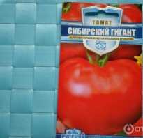 Томат Сибирский Гигант — описание сорта, отзывы, урожайность