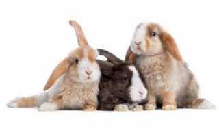 Породы кроликов: меховые и пуховые (с фотографиями и названиями)